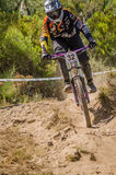 Luis Ribeiro Stock Images