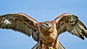 Luister met Vleugels uit met Blauwe Hemelachtergrond stock afbeeldingen