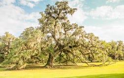 Luizjana Dębowi drzewa Zdjęcie Royalty Free