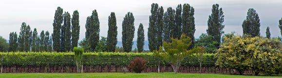 Vineyard, Lujan de Cuyo, Mendoza Royalty Free Stock Photo