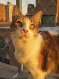 Lujan, le chat Photo libre de droits