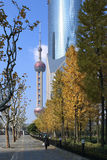 Lujiazui Autumn Stock Photo