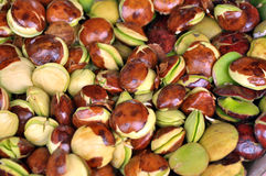 Luk-nieng, Djenkol-Bohnenfrucht Stockfoto