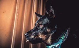 luke Fotos de Stock Royalty Free