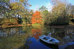 Lukesland Gardens, Devon Stock Photo