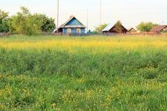 Luksusowa łąka Zdjęcia Royalty Free