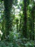Luksusowa dżungla lubi roślinność Maui Hawaje fotografia stock