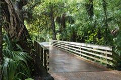 Luksusowa południowa natura przy tęczą Skacze, Floryda, usa Zdjęcie Stock