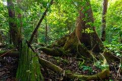 Luksusowa porośle dżungli roślinność fotografia royalty free