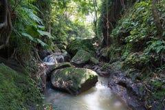 Luksusowa porośle dżungli roślinność w zwartym tropikalnym lesie deszczowym Małpi las, Bali wyspa, Indonezja obraz royalty free