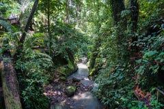 Luksusowa porośle dżungli roślinność w zwartym tropikalnym lesie deszczowym Małpi las, Bali wyspa, Indonezja obraz stock
