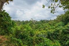 Luksusowa porośle dżungli roślinność w zwartym tropikalnym lesie deszczowym Małpi las, Bali wyspa, Indonezja fotografia stock
