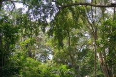 Luksusowa porośle dżungli roślinność w zwartym tropikalnym lesie deszczowym Munduk, Bali wyspa, Indonezja fotografia royalty free