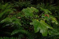 Luksusowa roślinność i gęsty underbrush w ciemnym tropikalnym lesie deszczowym fotografia royalty free