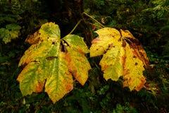Luksusowa roślinność i gęsty underbrush w ciemnym tropikalnym lesie deszczowym obraz royalty free