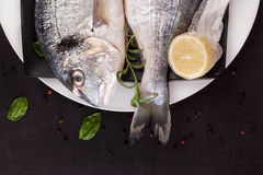 Luksusowa ryba, owoce morza pojęcie. obraz royalty free