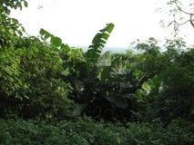 Luksusowa tropikalna ro?linno?? blisko San Isidro, Lipy miasto, Filipiny obraz royalty free