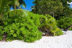 Luksusowa Tropikalna roślinność na plaży Obraz Royalty Free