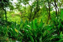 Luksusowa tropikalna zielona dżungla Obraz Royalty Free