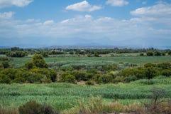 Luksusowi południe - afrykanina krajobraz z górami, pola, krzaki Obrazy Royalty Free
