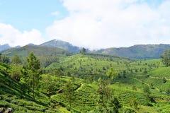 Luksusowi Zieleni wzgórza, Herbaciani ogródy i niebieskie niebo w Naturalnym krajobrazie w Munnar, Idukki, Kerala, India obrazy stock