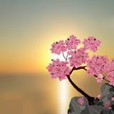 Luksusowy japończyk Sakura Drzewo różowa wiśnia na kamieniu Przeciw tłu piękny zmierzch ilustracja ilustracji