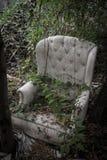 Luksusowy karło przerastający roślinami obraz stock