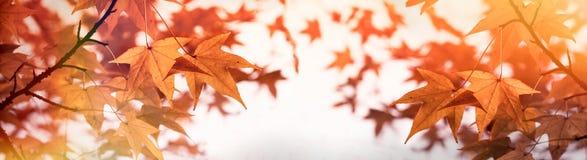 Luksusowy ulistnienie - jesień liście na odgórnym drzewie, piękna natura w jesieni Zdjęcie Stock