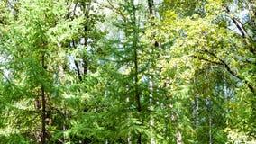 luksusowy ulistnienie w zielonym lesie w lecie zdjęcie stock