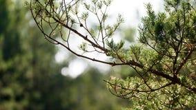 luksusowy wczesny wiosny ulistnienie - wibrującej zielonej wiosny świezi liście Zdjęcie Royalty Free