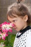 Lukta för blomma Arkivbilder
