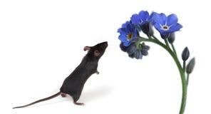 lukta för mus för blommor litet Royaltyfri Fotografi