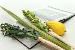 Lulav Stock Photos