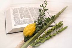 Lulav Stock Images
