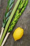 Lulav and Etrog. The Four Species, symbols of the Jewish festival of Sukkot Royalty Free Stock Image