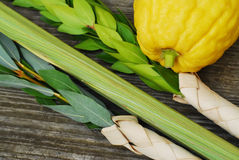 Lulav and Etrog. The Four Species, symbols of the Jewish festival of Sukkot Royalty Free Stock Photography