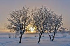 Lule River in winter sun Stock Images