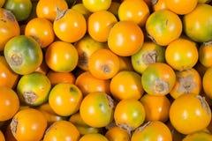 Lulo tropisk frukt - Solanumquitoense royaltyfri foto