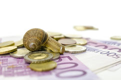 Lumaca che si siede sugli euro soldi Fotografie Stock Libere da Diritti