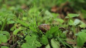 lumaca che striscia nell'erba, sul fondo della natura archivi video