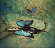 Lumaca con le ali Immagine Stock