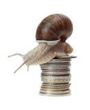 Lumaca con le monete Immagine Stock Libera da Diritti