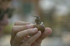 Lumaca curiosa Fotografia Stock Libera da Diritti