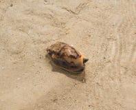 Lumaca del cono alla spiaggia fotografia stock libera da diritti