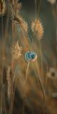 Lumaca della conca su una lama di erba Fotografia Stock Libera da Diritti