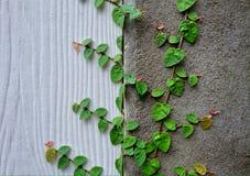 Lumaca della natura del cemento della parete Immagini Stock