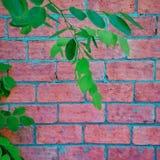 Lumaca della natura del cemento della parete Fotografia Stock Libera da Diritti