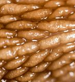 Lumaca della pelle come fondo Macro eccellente Fotografia Stock