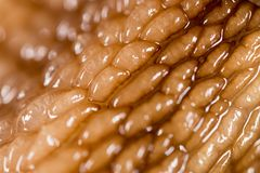 Lumaca della pelle come fondo Macro eccellente Immagine Stock