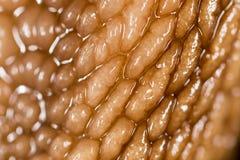 Lumaca della pelle come fondo Macro eccellente Immagini Stock Libere da Diritti
